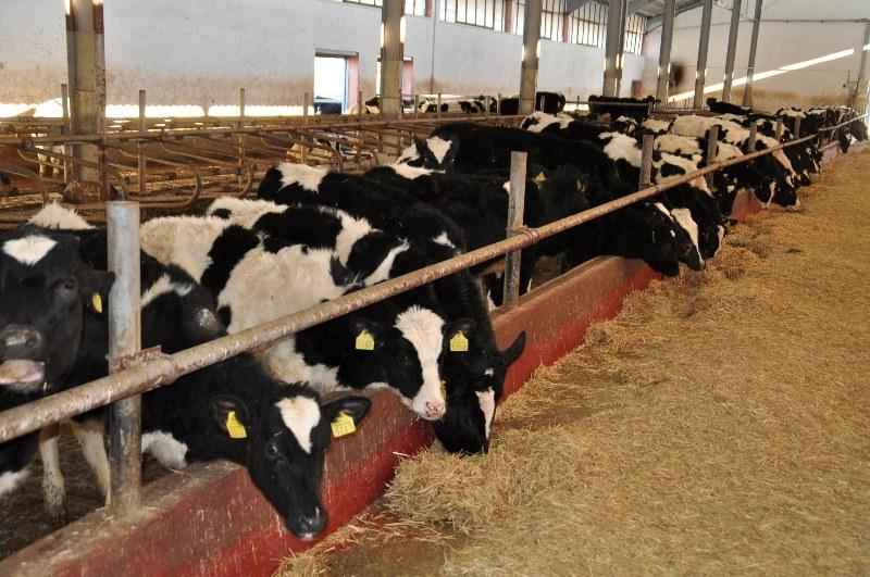 Hayvan çiftlikleri enerjisini güneşten karşılayacak