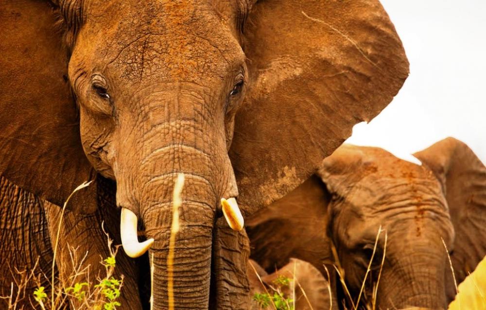 WWF: 2020'de türlerin 3'te 2'si yok olabilir