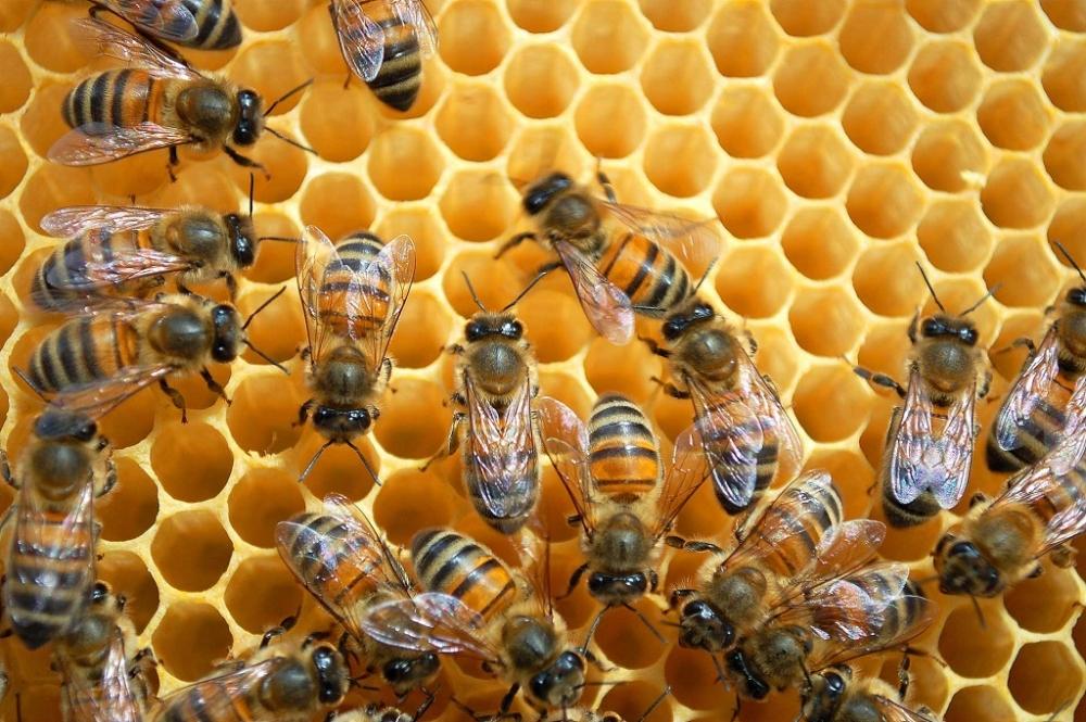 4 ilde bal arılarının esrarengiz toplu ölümü!