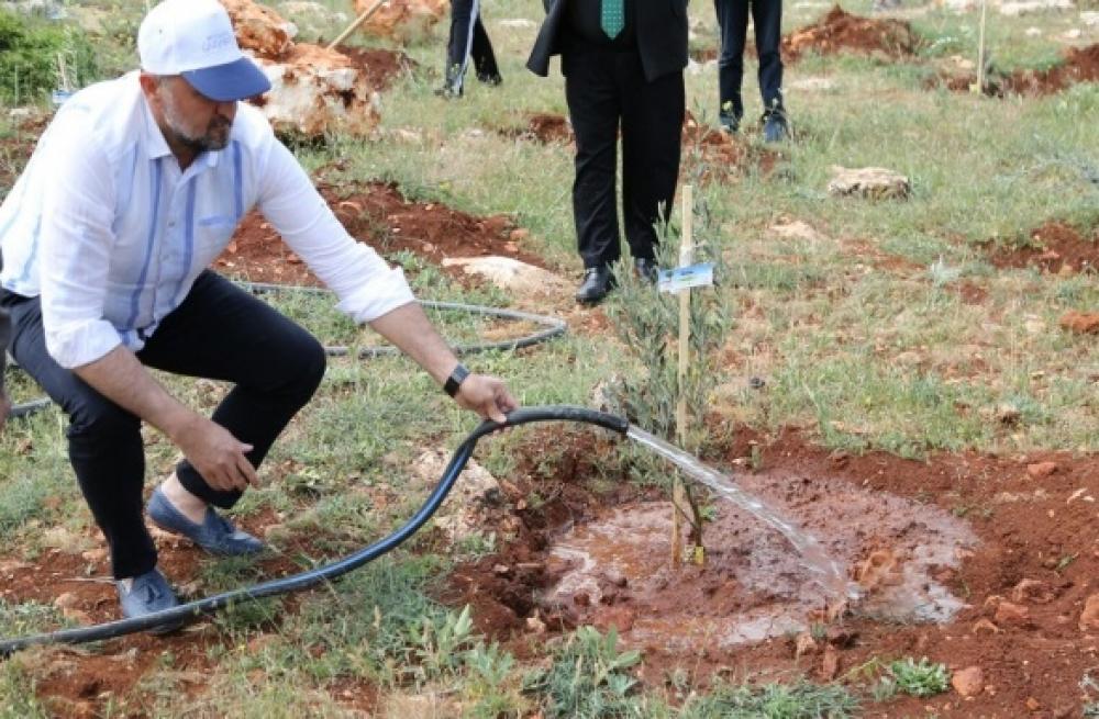 Gaziantep Büyükşehir'den doğaya 250 zeytin fidanı