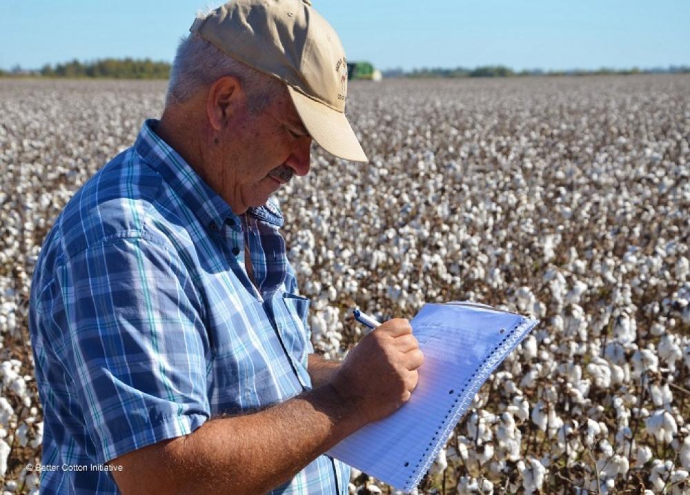 Bin adet pamuk çiftçisi aranıyor!