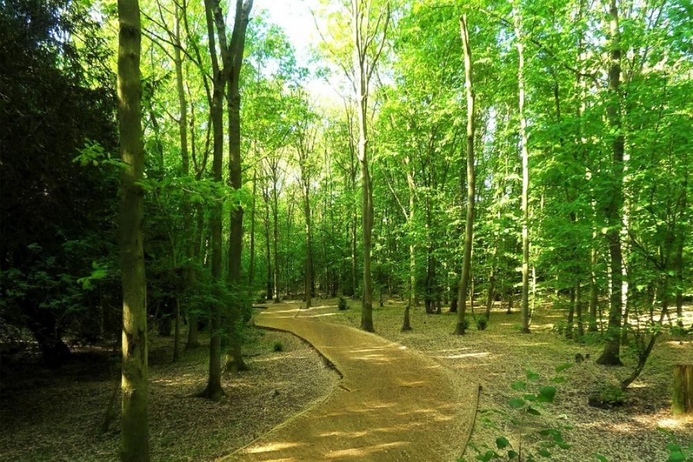 ING Bank TEMA ile turuncu orman oluşturacak