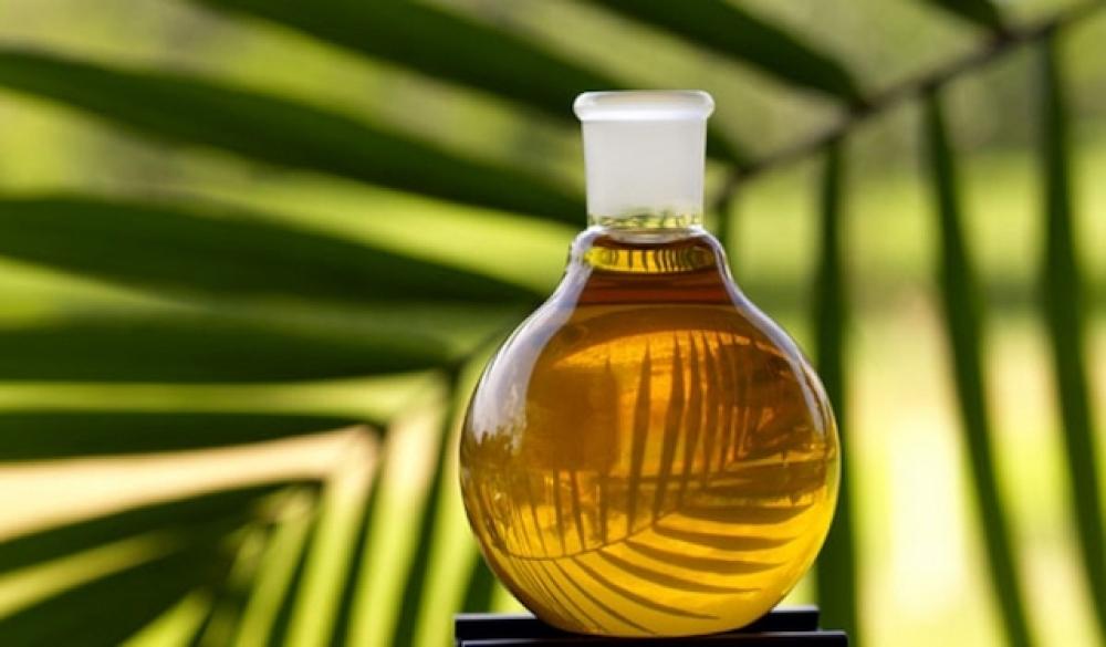 Norveç palm esaslı biyodizeli yasaklıyor