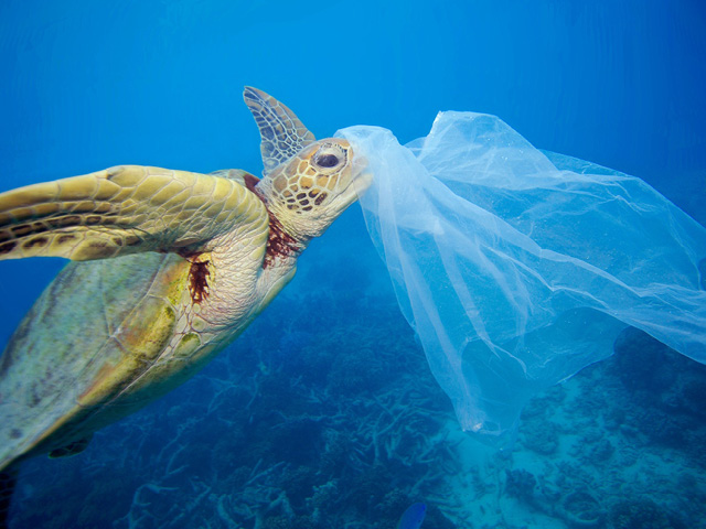 WWF'den denizlerdeki plastik kirliliğine karşı kampanya