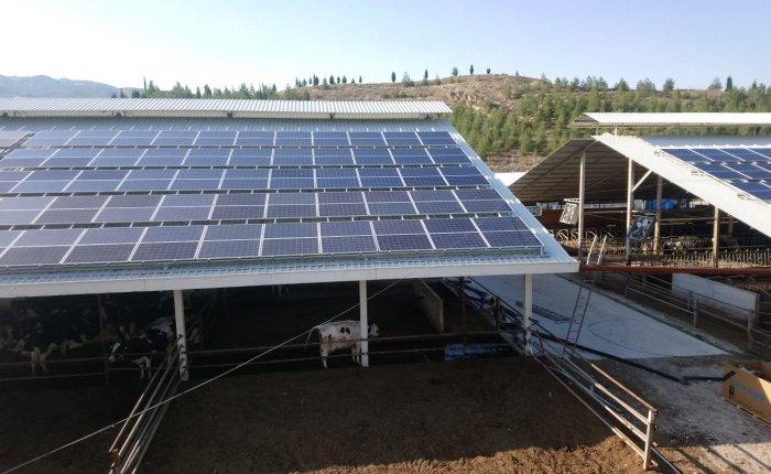 Öğün Süt Hayvancılık elektriğini güneşten alıyor