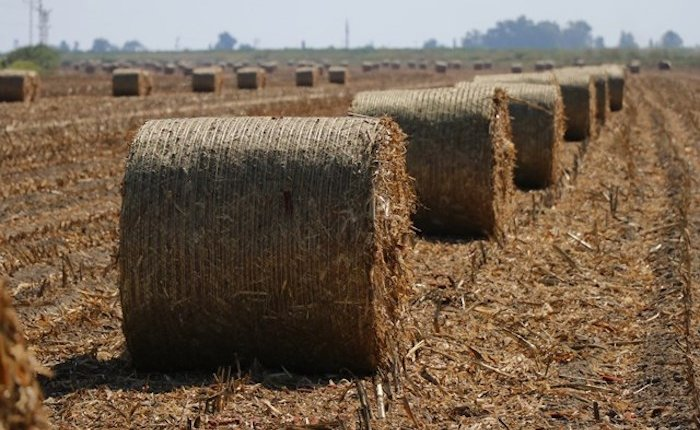 Şanlıurfa'nın mısır ve pamuk atıklarından elektrik üretilecek