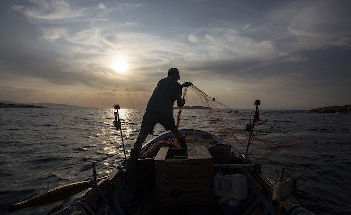 Akdeniz'in hassas deniz canlıları için Tunus, Fas ve Türkiye bir arada!