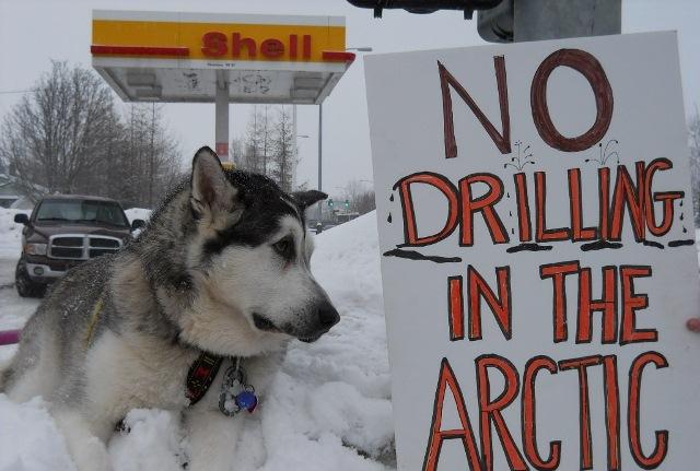 Shell Kuzey Buz Denizi'nde petrol arama faaliyetlerini erteledi