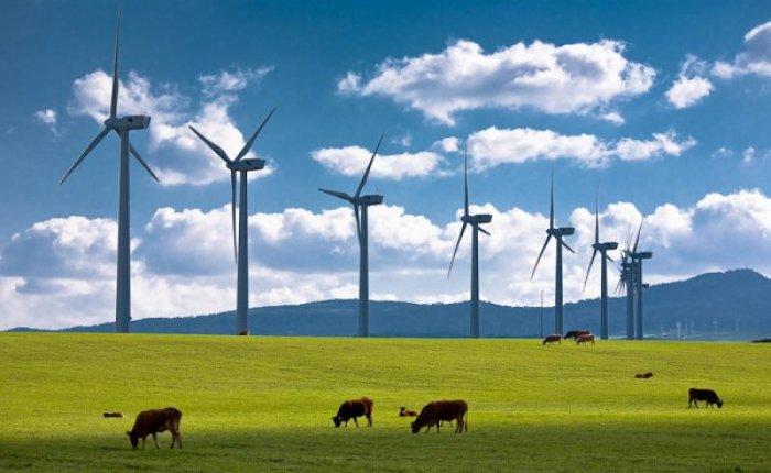 İngiltere'nin rüzgar enerjisi üretimi yüzde 715 arttı
