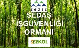 SEDAŞ'tan iş güvenliği ormanı