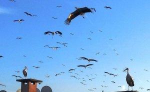 EPDK'dan göçmen kuşlar için 895 bin lira destek