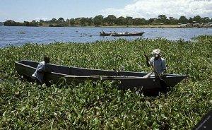 İngiliz şirket Kenya'nın yabani göl otlarını elektriğe çevirecek