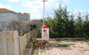 Sokak hayvanlarına GES'li çözüm