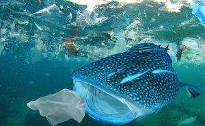 WWF'den plastik kirliliği uyarısı