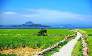 Dünyanın ilk sıfır karbon salan adası Kore'de