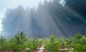 Zorlu Enerji hatıra ormanlarında 145 bin ağaç