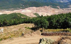 TEMA Vakfı: Kirazlı Altın Madeni için en az 195 bin ağaç kesildi