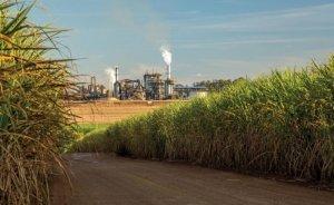 BP Brezilya'da Bunge ile birlikte kamış küspesinden elektrik üretecek