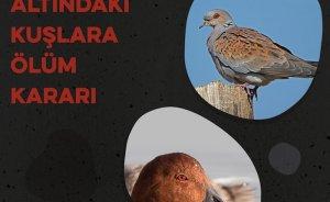 Üveyik ve elmabaş patka kuş türlerinin avlanmasına izin!