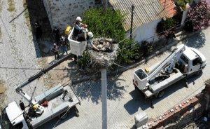 Gediz Elektrik çalışanları öksüz 3 leylek yavrusunu besliyor