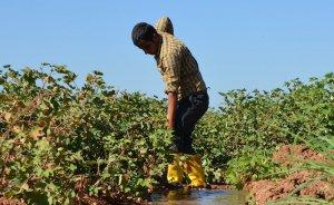 TEDAŞ çiftçinin elektrik borcunu yapılandırıyor