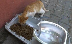 Atık sokak lambasından kedilere mama ve su kabı
