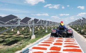 Baofeng'in agrivoltaik GES'i büyütülecek