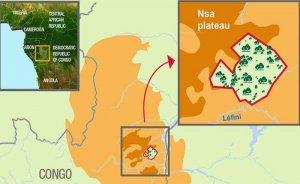 Total, Kongo Cumhuriyeti'nde ağaçlandırma yapacak