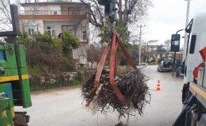 Batı Akdeniz'e gelen leyleklere güvenli yuva