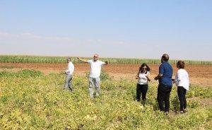 Mardinli çiftçi elektrik giderini yüzde 70 azalttı