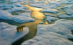 Arçelik, çevreci buzdolabıyla karbon azalım geliri sağlayacak