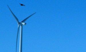 Rüzgar enerji şirketine kuş ölümleri için 1 milyon $ ceza