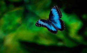 Fukuşima`daki kelebekler mutasyon geçirmiş